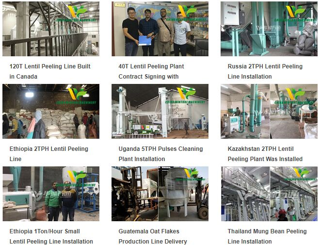 grain processing project cases
