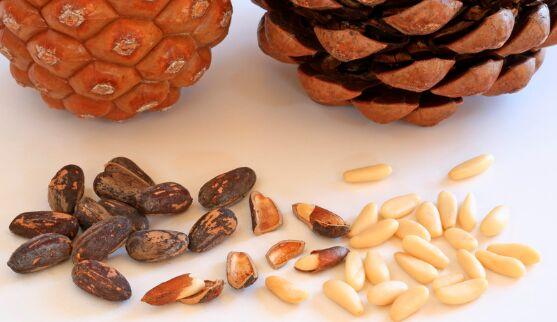 Pine Nut Dehuller