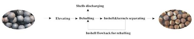 foxnut dehulling and separating machine