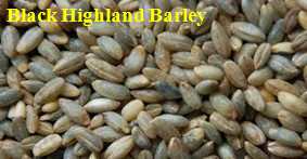 MTPS series highland barley peeling machine.jpg